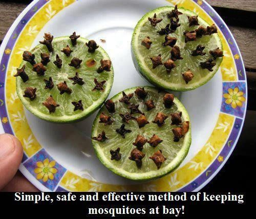 Simple, safe and effective method of Keeping mosquitoes at bay!  Just slice a lime in half, press in a good amount of cloves and voila!  Instant all natural bug repellent!