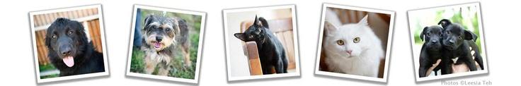 Čierna mačička Atlanta