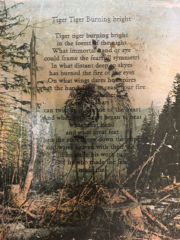 "Sampling inspired by the poem ""Tiger Tiger Burningbright Bright"" by William Blake"
