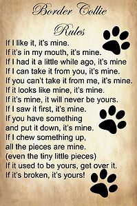 Border collie rules -- So true! I miss my collie.<3