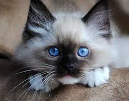 Image result for cute cat pictures