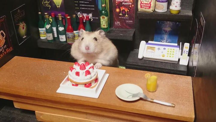 hamsters-bartenders-serving-tiny-food-and-drinks-07