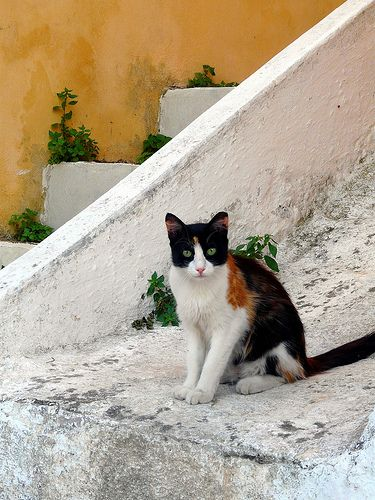 Cat on stairs, Poros town