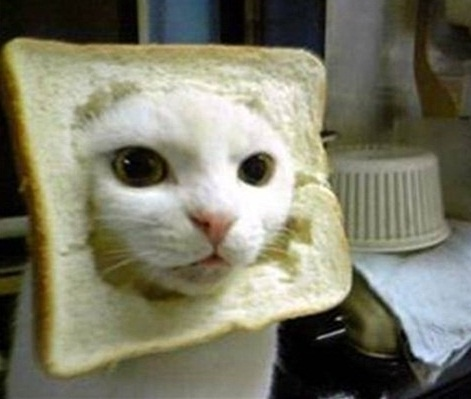 inbread cat | Cute and Cuddley | Pinterest
