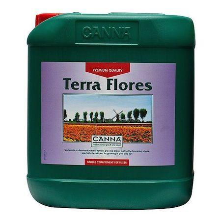 canna-terra-flores-5