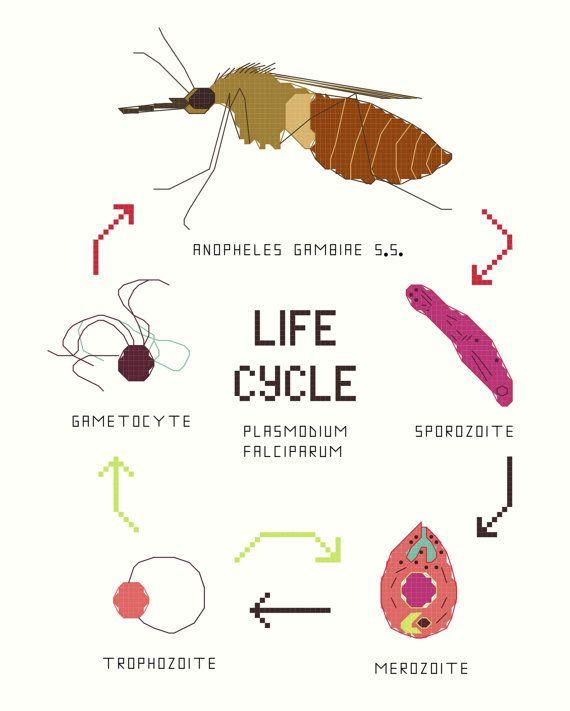 Cross Stitch Pattern Set  Malaria Life Cycle by aliciawatkins