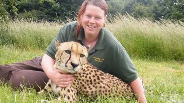 Tigre ataca y mata a su cuidadora en Reino Unido