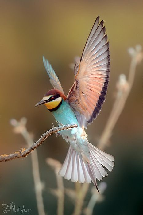 Exotic bird with fanned wings / nature