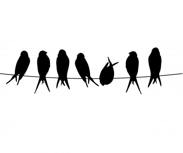 Kostenloses Bild auf Pixabay - Vogel, Vögel, Draht, Sitzend                                                                                                                                                                                 Mehr