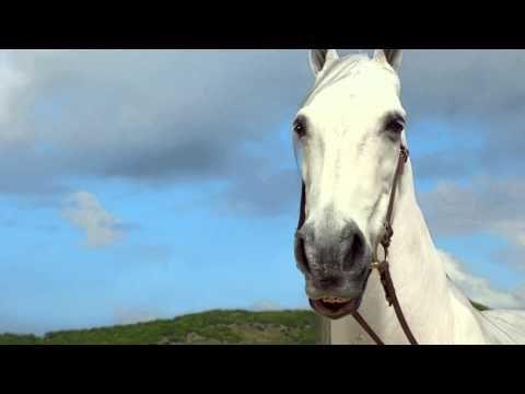 Hannah Davis Washing Her Horse - YouTube. Hannah Davis a US Virgin Islander and commercial taped at Lindquist Beach (Smith Bay Park, St. Thomas, VI).