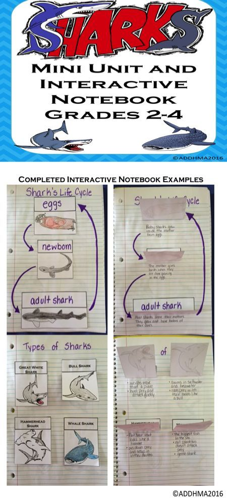 Mini Unit about sharks. Includes 13 reading passages about sharks and 12 different types of sharks and the shark life cycle. Passages are half a page and have reading comprehension questions below. Interactive notebook foldables are to create an interacti