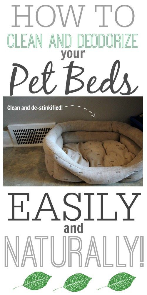 A quick tip for cleaning smelly pet beds using baking soda. Leave on for hours then vacuum.