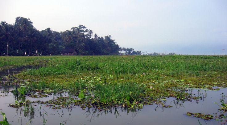 Rawa adalah genangan air di daratan sebagai akibat letaknya yang lebih rendah dari daerah di sekitarnya.