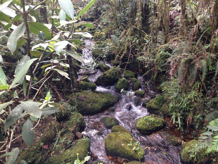 "Parque nacional ""iguaque"""