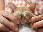 5 Precious Peekaboo Kitties: Precious Peekaboo, Precious Kitten, Peekaboo Kitties