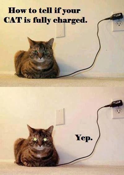 LOL!                                                                                                                                                                                 More