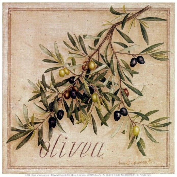 Картинки по запросу винтажная ботаника олива