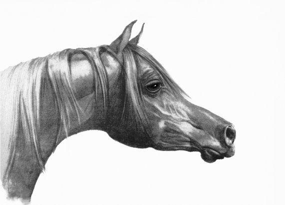 Oltre 25 fantastiche idee su testa di cavallo su pinterest for Cavallo disegno a matita