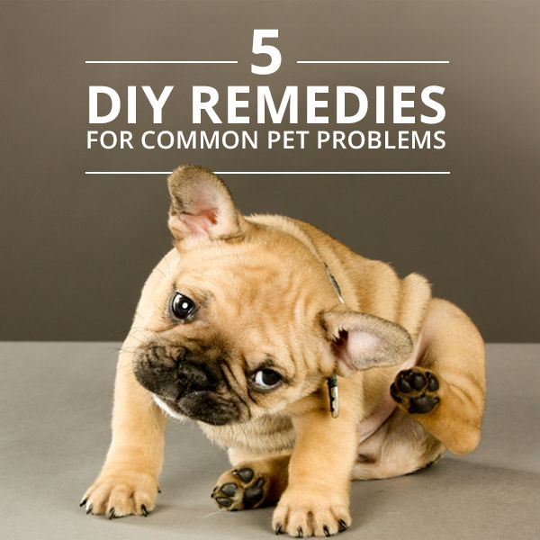 5 Remèdes dans ses placards pour son chien. (5-DIY-Remedies-for-Common-Pet-Problems) (http://skinnyms.com/5-natural-home-remedies-common-pet-problems/)