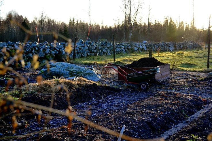 Winter sowing. Sweden, December 2014. #garden #gardening #kitchengarden #growyourown #vegetables #trädgård #odla #köksträdgård #wintersowing