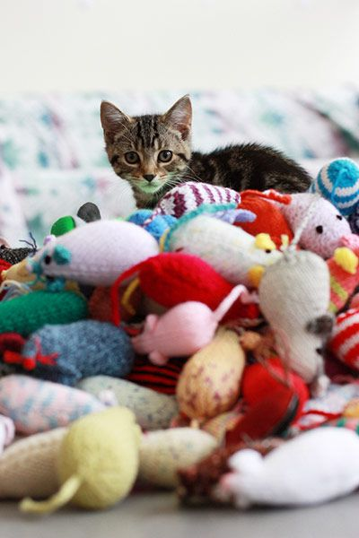 Knitting Kittens Battersea : Knit and purrl battersea cats their new toys
