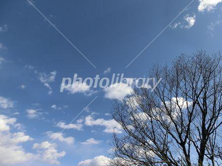 初冬の空-写真素材