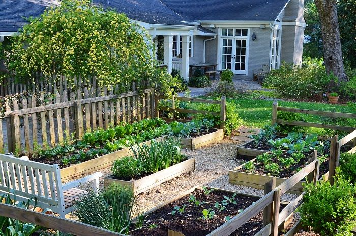 Family Vegetable Garden Basics - Redeem Your Ground | RYGblog.com