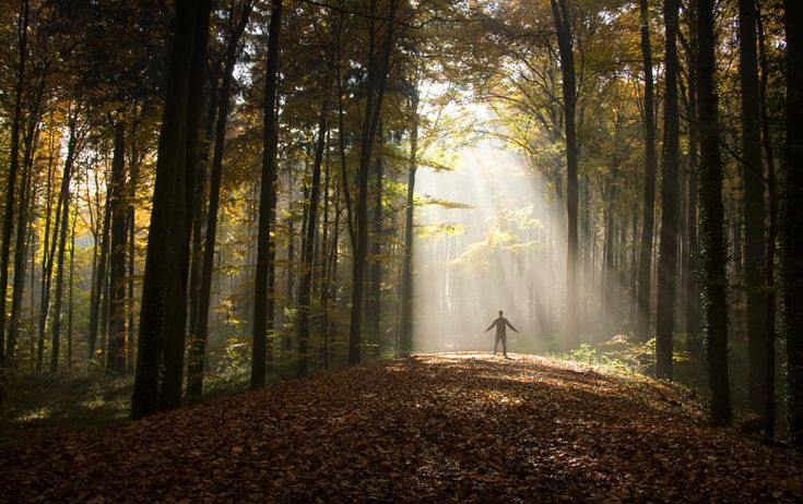 Feeling stressed? Give shinrin-yoku (forest bathing) a try!  SBS Life explains the benefits of green therapy - and it's really easy to put into practice.