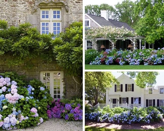 Classic hydrangea elegance   Garden-life   Pinterest