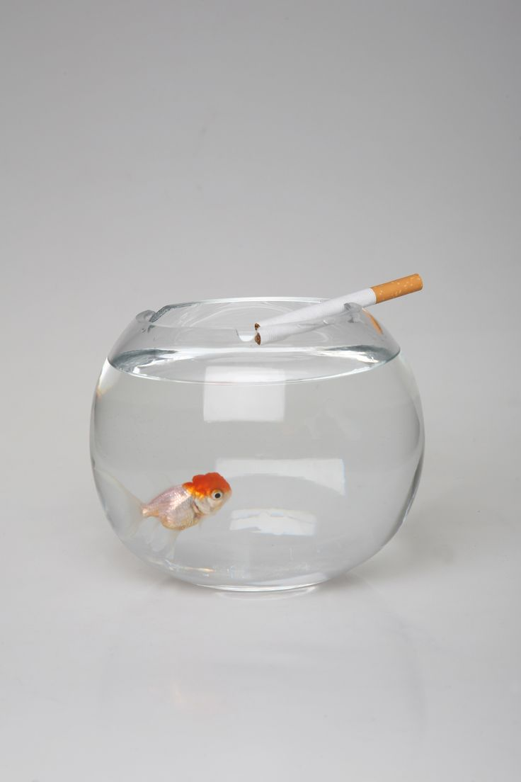 Ashquarium acts as a stimulus obliging people to question their smoking behavior. The fish inside the Ashquarium acts like a reflection or surrogate of the person who smokes. If smokers throw their ash into the Ashquarium, the water will become dirty affecting the health of the fish.