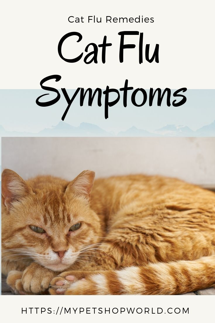 Pin By Diana Mcfarlane On Animal Pictures Excessive Itching Snoring Allergies