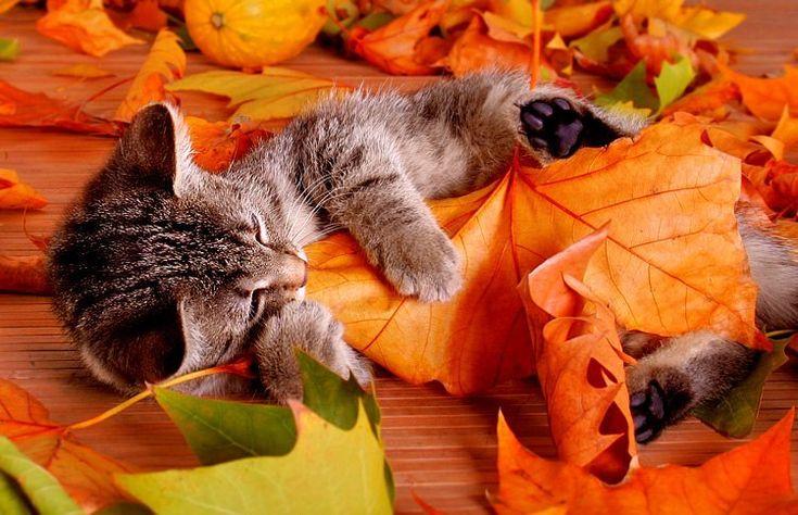картинки коты осень утро пил