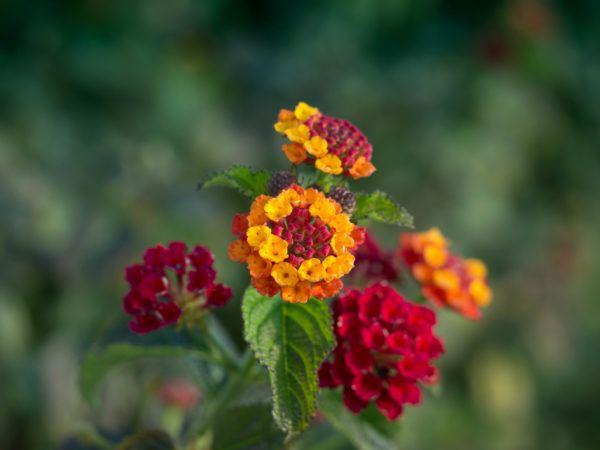 Die 25+ Besten Ideen Zu Exotische Pflanzen Auf Pinterest ... Exotische Pflanzen Terrasse Haus