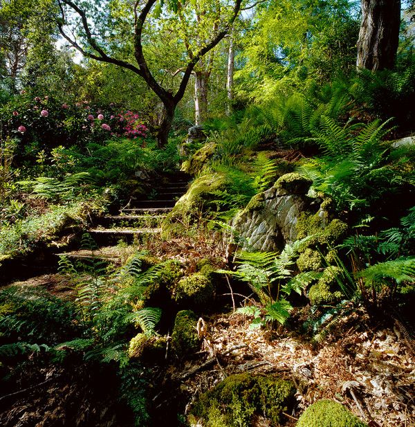 Woodland Garden Design woodland garden Woodland Garden Eventually Id Like To Have Steps Like This From The Deck