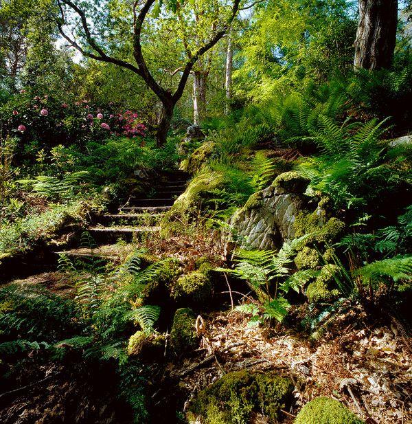 25 best ideas about woodland garden on pinterest forest for Woodland garden designs