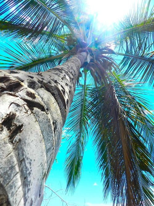 Palms of paradise::Tropical Island :: Travel + Explore + Discover:: Beautiful…