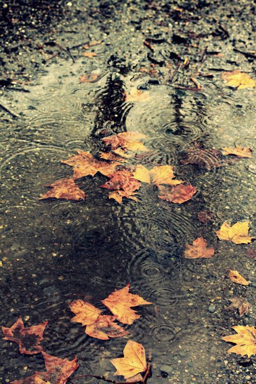 Rainy Day Puddles And Autumn Leaves.