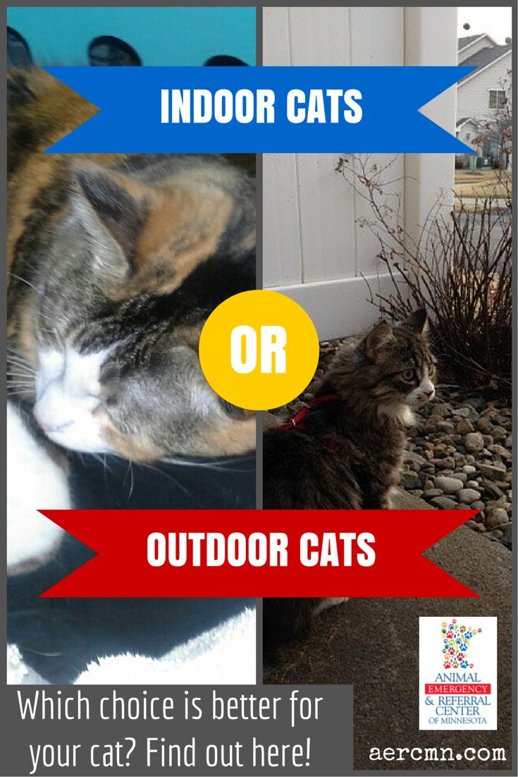 10 best tips for pet owners images on pinterest pets for Having an indoor cat
