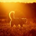 Hunde - Hundesport und Fotografie
