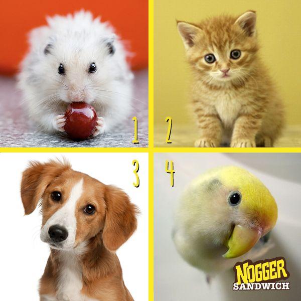 Bir sabah uyandığında hangisi olmak isterdin?