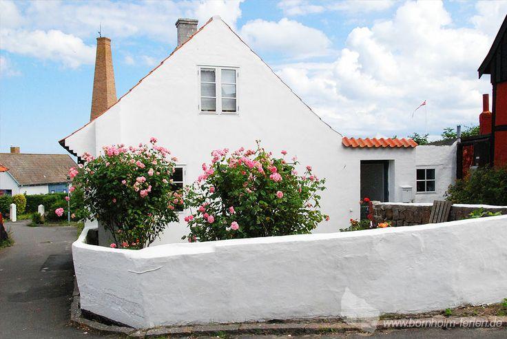 Rosensträucher im Zentrum von Allinge, Insel Bornholm #rosen #allinge #insel #bornholm