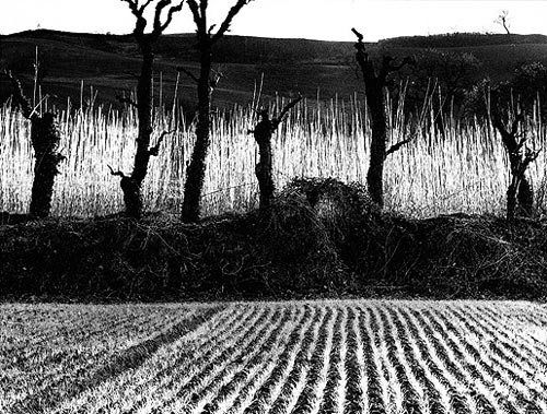 """Landscapes Series"", Mario Giacomelli   1953-63"