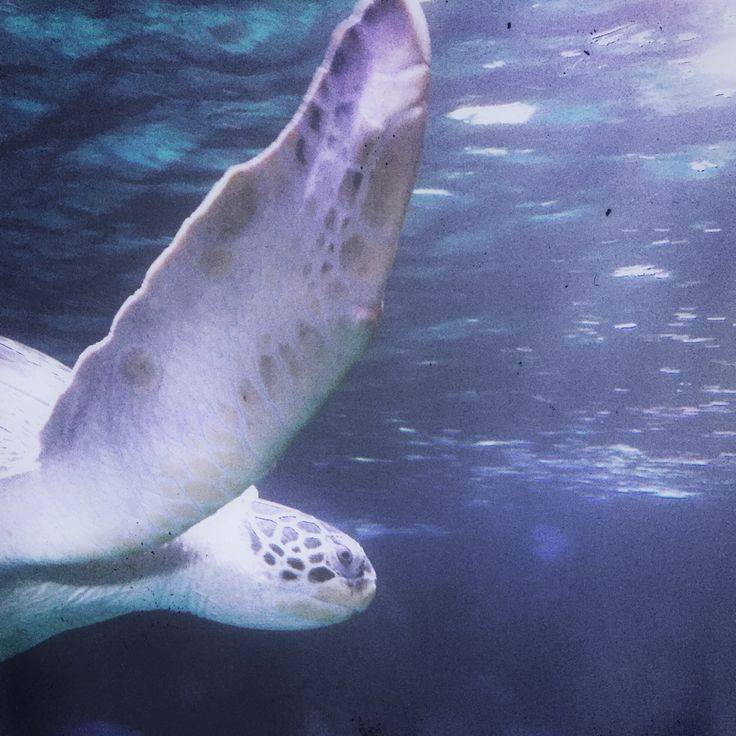 Rocco & patrick Salvadori   From my underwater series  Turtle