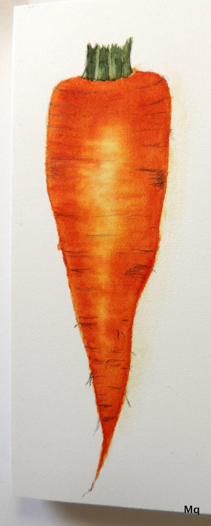 Wortel in aquarel 22-7-2017  11x3,5 cm   Carrot in watercolor