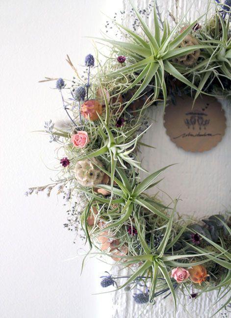 air plant wreath by robin charlotte DIY craft ideas