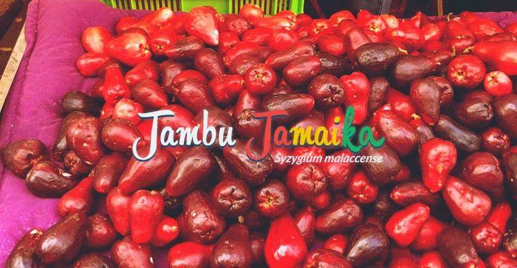 Nikmat dan Segarnya Menyantap Buah Jambu Jamaika