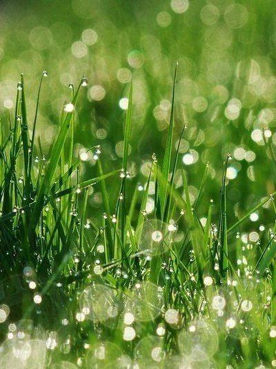 Трава | Школа Физиогномической Соционики
