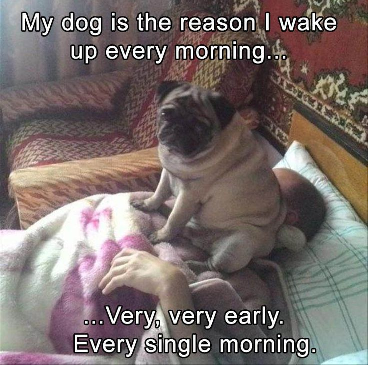 Funny Animal Pictures Of The Day – 24 Pics