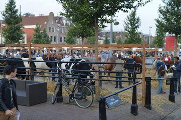 Koemarkt, Purmerend, Netherlands