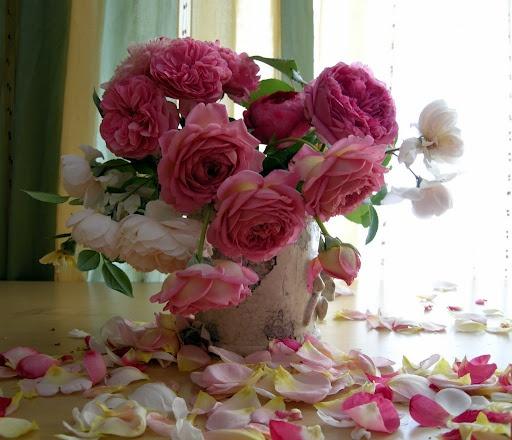 roses & fallen petals..
